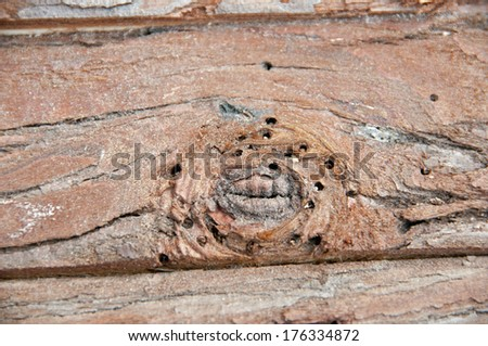 Wood suffering from woodworm - stock photo