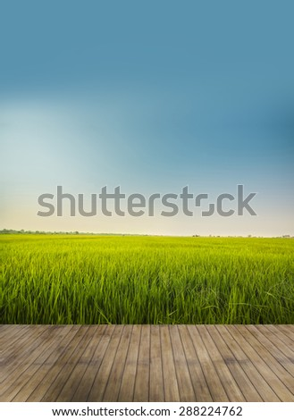 wood terrace in rice field with blue sky - stock photo