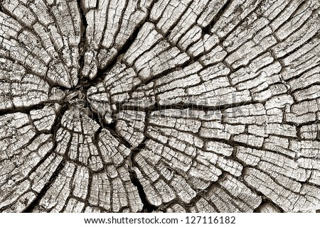 Wood texture 01 - stock photo