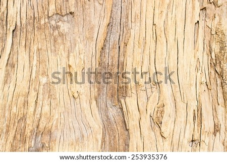 wood texture. Abstract background - stock photo