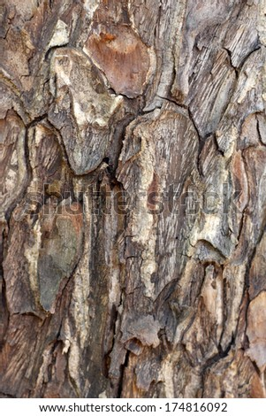 wood.texture.background