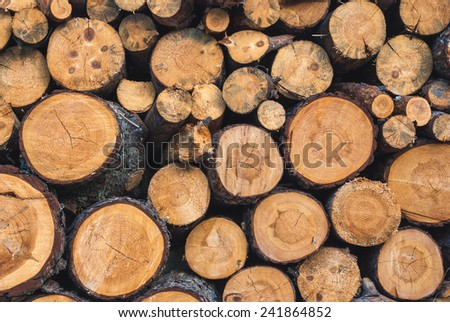 Wood texture background have many logs that cut from big trees and small trees  - stock photo
