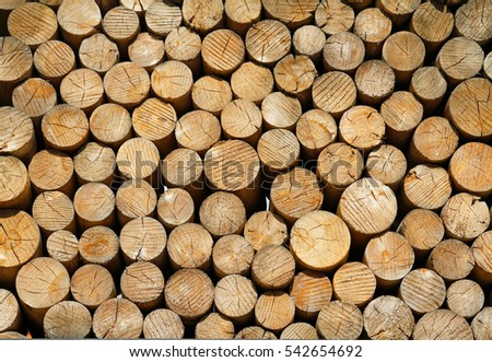 Wood texture background of cut logs