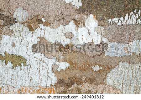 Wood texture,Bark texture for the background or text - stock photo