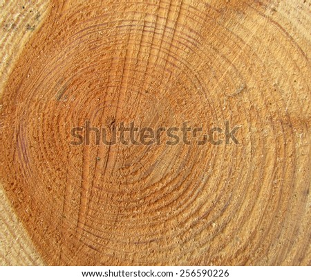 Wood texture of background - stock photo
