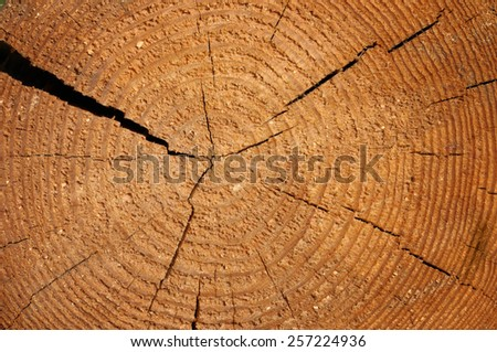 wood texture with growth rings - stock photo