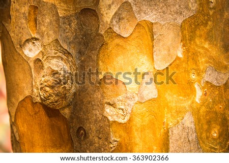 wood texture/wood texture background. the slide wood texture. the wood in warm tone. the colourful wood texture. - stock photo