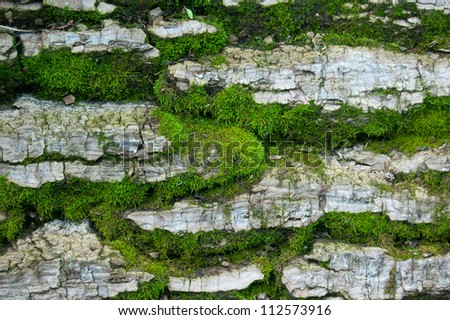 Wood textured background with green moss - stock photo