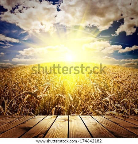 wood textured backgrounds in a room interior on the wheat and sky backgrounds - stock photo