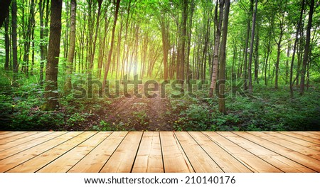 wood textured backgrounds on the forest backgrounds