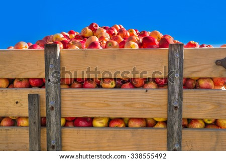 Wood truck crate filled with harvest of apples - stock photo