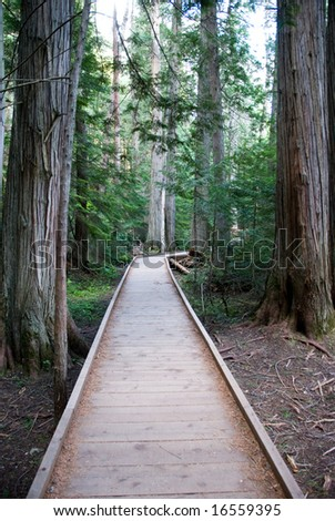 Wood walkway through forest