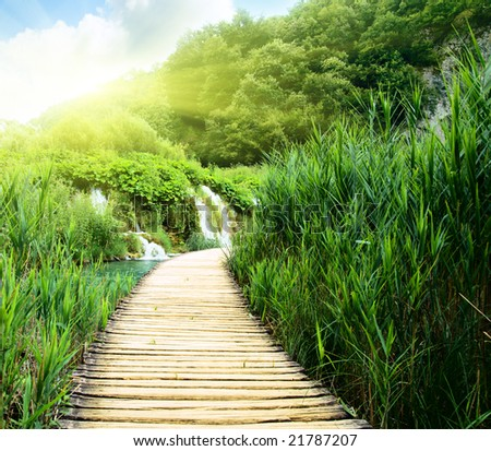 wood way in deep forest - stock photo
