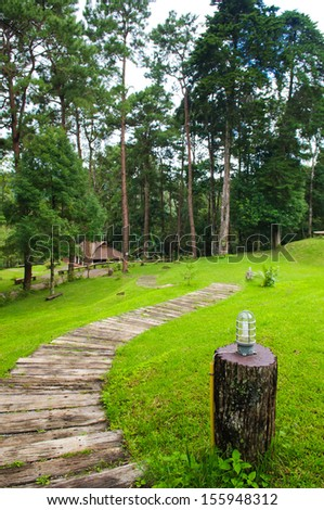 Wood way in the forest - stock photo