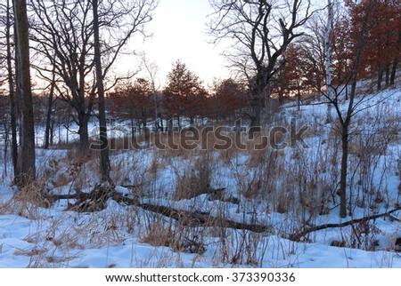 wooded landscape of lebanon hills regional park in eagan minnesota surrounding mcdonough lake at dusk in winter - stock photo