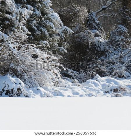 Wooded snow scene - stock photo