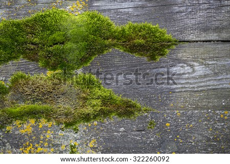 wooden and moss  texture - stock photo