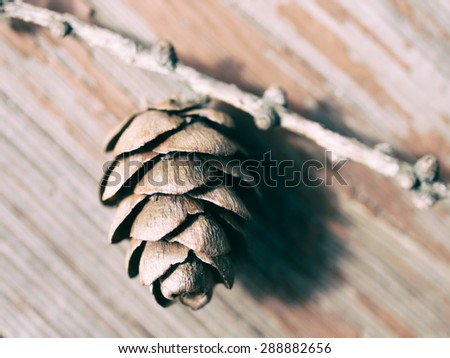 Wooden background with larch cone - stock photo