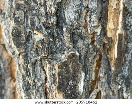 Wooden bark texture close-up.