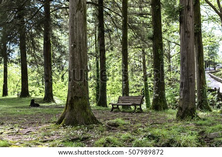 Wooden bench between tall trees.