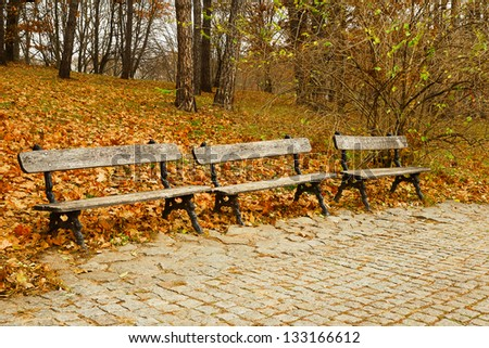 Wooden benches in the park in autumn season - stock photo