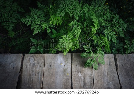 wooden board background and fern forest in the Natural Park, Wildlife. Wooden bridge on the trail - stock photo