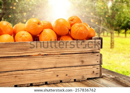 wooden box of fresh fruits and old table space in garden  - stock photo