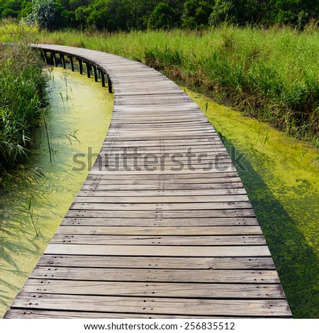 Wooden bridge in jungle - stock photo