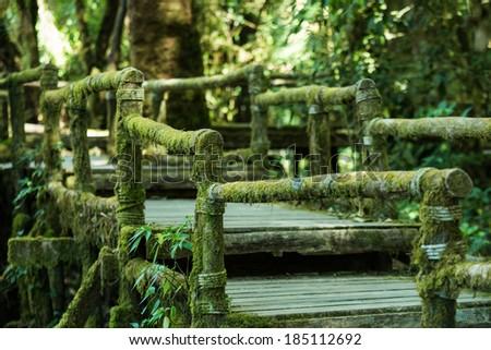 Wooden bridge in tropical rain forest - stock photo