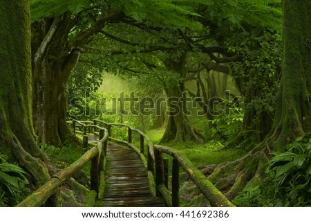 Wooden bridge over the rainforest in Southeast Asia - stock photo
