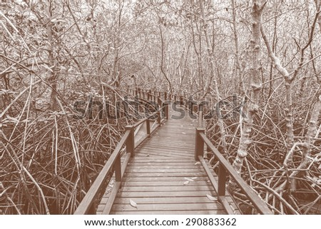 Wooden bridge the forest mangrove at Petchaburi, Thailand processed in tinted photo in blue tone - stock photo