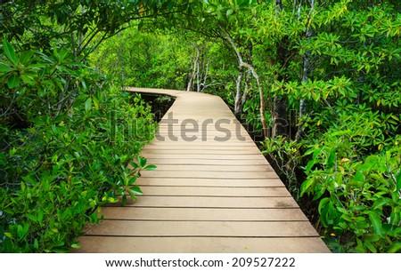 Wooden bridge to the jungle, Tha pom mangrove forest, Krabi,Thailand - stock photo