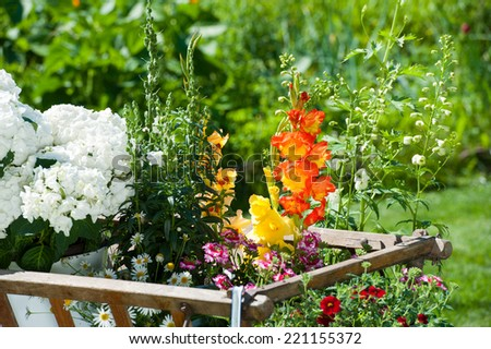 Wooden cart with flowers in a garden