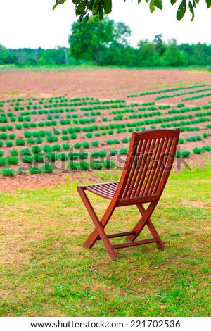Wooden chair in the young lavender field. Summertime outdoors.