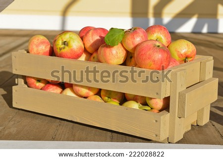 Wooden crate box full of fresh apples - stock photo