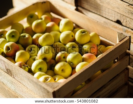 Wooden crate box full of fresh green apples