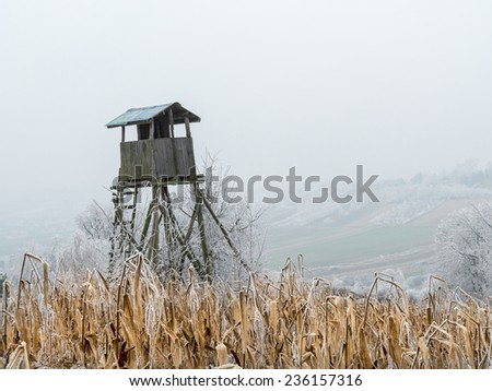 Wooden deer blind in the middle of the corn field - stock photo