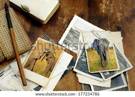 wooden desk filled with vintage objects and old photo's from a safari in Africa showing elephants on two  images  - stock photo