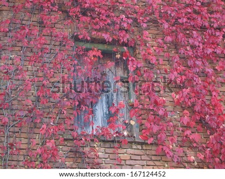 wooden door and front of an old brick house with climbing plant - stock photo