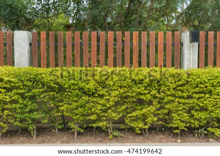 Wooden fence and bush