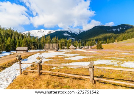 Wooden fence on meadow with blooming crocus flowers in Chocholowska valley, Tatra Mountains, Poland - stock photo