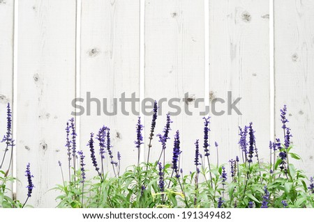 Wooden fence with flower border - stock photo