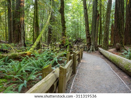 Wooden fenced footpath guides tourists through Cathedral Grove located in MacMillan Provincial Park on Vancouver Island, Canada, it's a famous destination for its large old growth Douglas-fir forest - stock photo