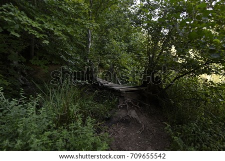 Wooden foot bridge at forest