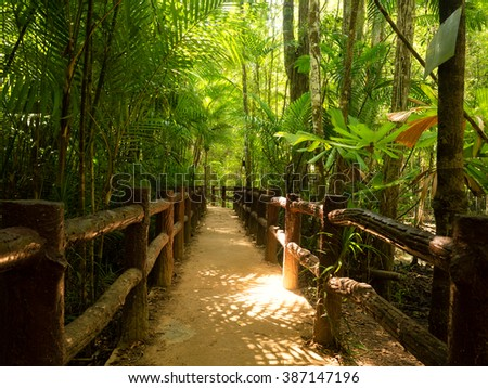 Wooden footpath in misty tropical rain forest of Thailand - stock photo