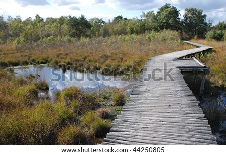 Wooden footpath through bog