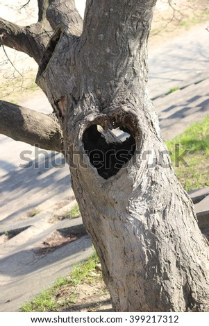 Wooden hole at the heart-shaped