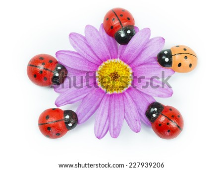 Wooden ladybirds with purple flower on white background - stock photo
