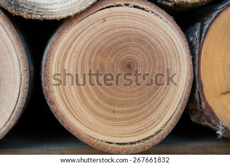 Wooden logs texture, close up of annual rings. - stock photo