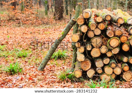 Wooden logs. Timber logging in autumn forest. Freshly cut tree logs piled up. Autumnal fall scenery. - stock photo